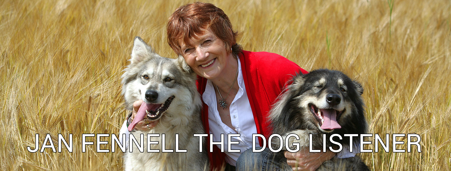 Welcome   Jan Fennell the Dog Listener